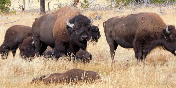 Road Trip 2015:Yellowstone